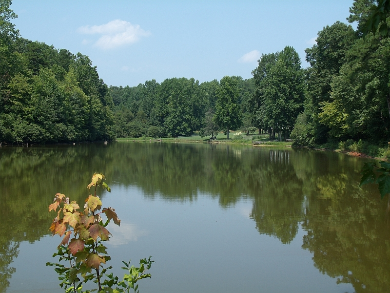 Stacey's Pond